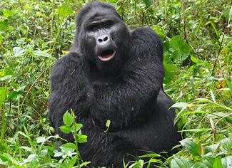 5 Days Gorilla safari