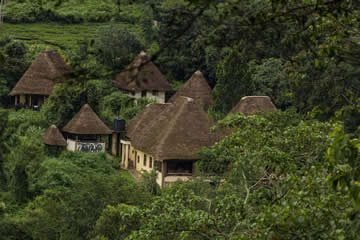 Bwindi Main Lodge